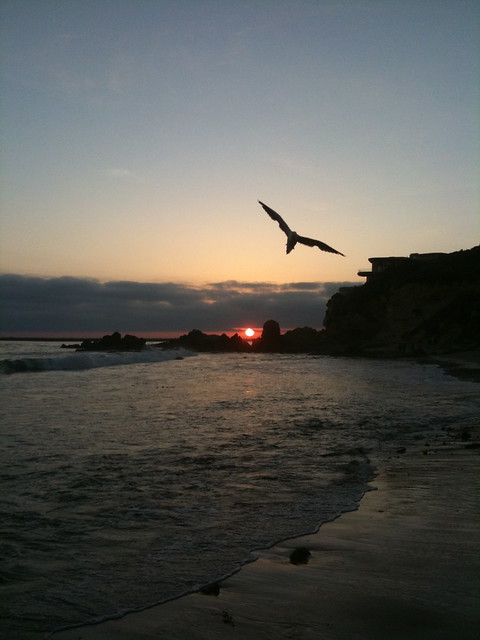 A seagull against the sunset