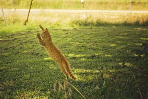 [フリー画像] 動物, 哺乳類, ネコ科, 猫・ネコ, 跳ぶ・ジャンプ, 201008041100