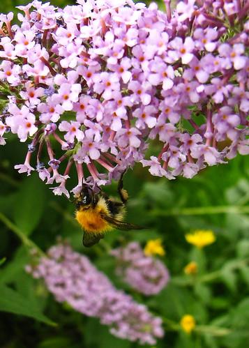 Bee ~ 2