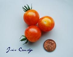 Isis Candy Tomatoe