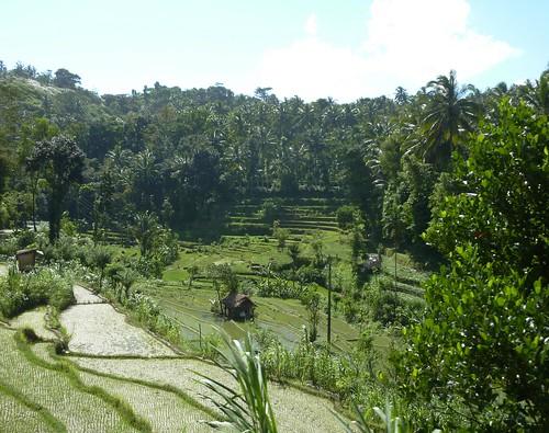 Bali-Tirtagangga (28)