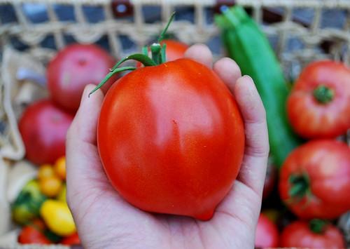 Ripe Amish Past Tomato