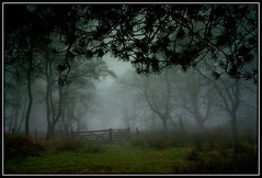 Brown Clee Mist 3 (Yagoobian) Tags: canon landscape landscapes scenics browncleehill yagoobian