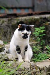 IMG_0521 (翔志) Tags: taiwan taipei 台灣 台北 貓 taipeicounty 台北縣 侯硐 houtong 猴硐 瑞芳鎮 貓村 catvillage rueifangtownship houtongcatstreet 百貓街