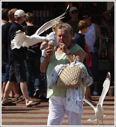 Seagulls-11
