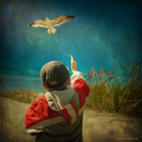 Learning to Fly - A boy and his seagull