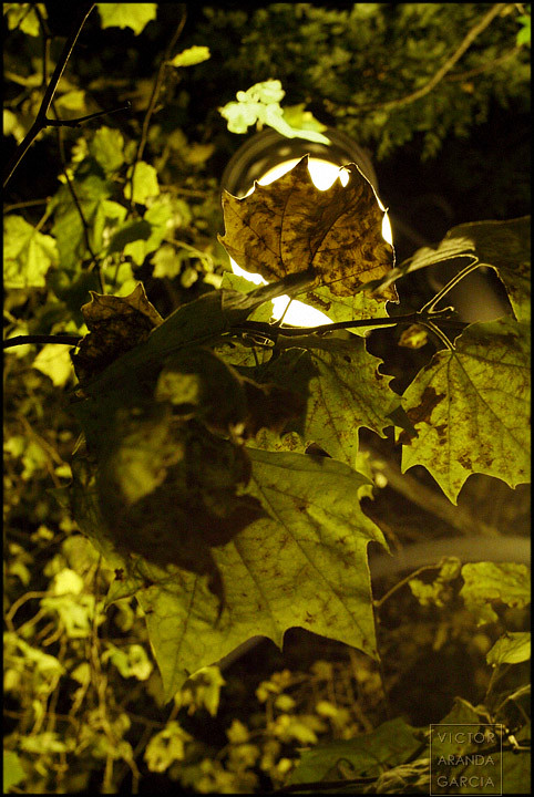 Night Leaves