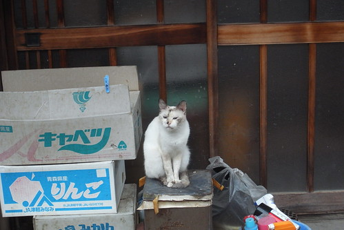 Today's Cat@2010-08-10