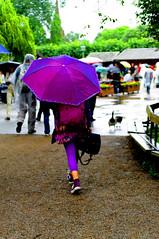 Le parapluie de Skansen (Edgard.V) Tags: houses windows rain umbrella stockholm faades chuva pluie skansen maison pioggia fentre estocolmo guarda parapluie faixada fotografiska