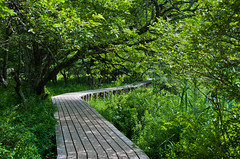 A Path Through the Greenery (sevenbrane) Tags: japan trail marsh nikko tochigi senjogahara yumoto senjofield