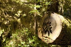 Shadow Play (mgier photography) Tags: old trees summer green rainforest vancouverisland boardwalk lush canopy majestic 2010 pacificrimnationalpark creaking