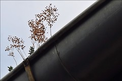21 - 12 aot 2010 Vitry-sur-Seine Quai Jules Guesde (melina1965) Tags: sky plants plant plante nikon iron ledefrance august ciel fer plantes 2010 aot vitry valdemarne vitrysurseine d80 copd photoscape geniiloci