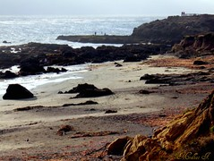 Coastal Views 54 (medaibl) Tags: ocean california trees water rocks waves pacific centralcoast medhathi coastalandwaterviewsbymi