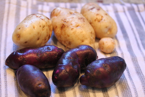 potatoes 037