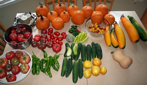 Weekly Harvest 8.13.2010