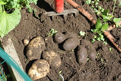 potatoes 002