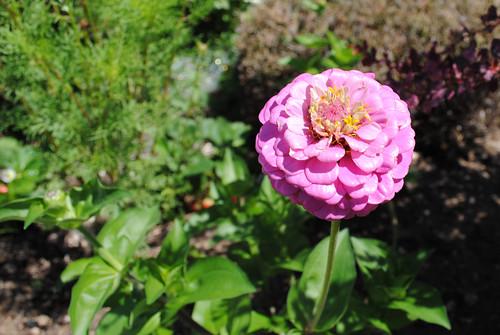 Tour de Fleurs