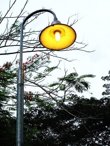 IMG_0495 Lamp Post