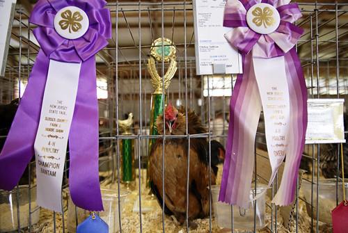 Prize-Winning Bantam.