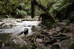 Great Ocean Road 70 (Scott Weatherson) Tags: trees nature water forest river stream australia victoria greatoceanroad lorne surfcoast erskinefalls