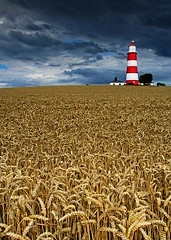 Happisburgh Lighthouse (Charlotte Brett Photography) Tags: uk lighthouse barley coast wheat norfolk phare happisburgh aton cropfield navigationalaid navaid happisburghlighthouse aidtonavigation signalisationmaritime