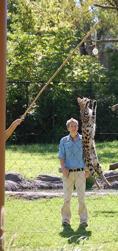 Jumping Serval