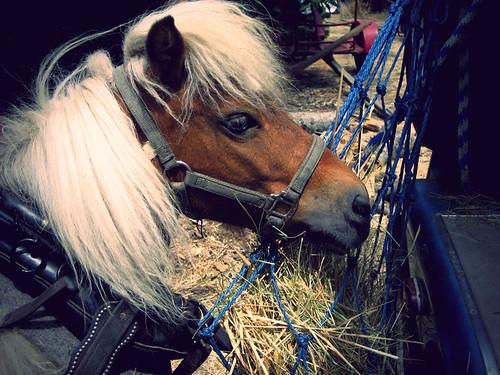 ponies008