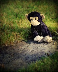 Bobo (gfpeck) Tags: cemetery animal sadness stuffed child activeassignmentweekly bestofweek1 bestofweek2 bestofweek3 bestofweek4 bestofweek5