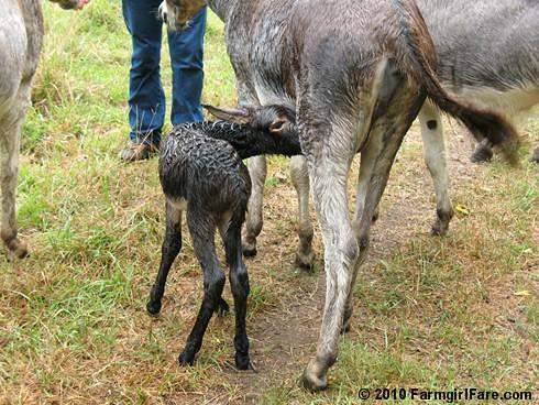 Esmeralda's Baby Boy 7