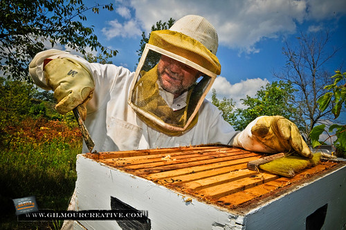 Fairhaven Honey Harvest