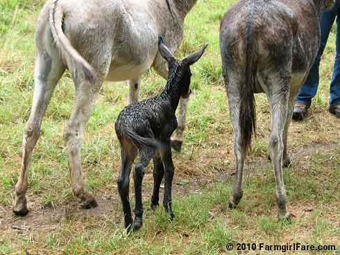 Esmeralda's Baby Boy 4