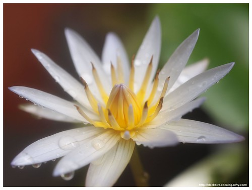 Water Lily 100821 #02