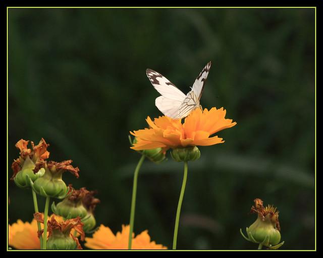 IMAGE: http://farm5.static.flickr.com/4114/4914264167_8908fd1231_z.jpg