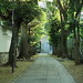 参道の並木