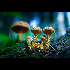 we are family (stella-mia) Tags: autumn blur macro cute green fall yellow closeup forest lumix dof bokeh pov sommer panasonic fungi explore fungus funghi pancake 20m