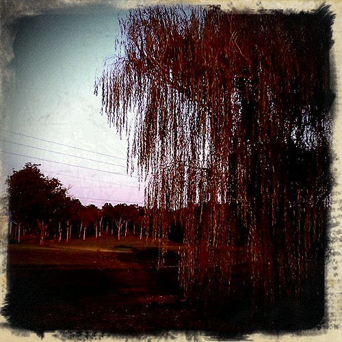 Retro Camera :: Weeping willow