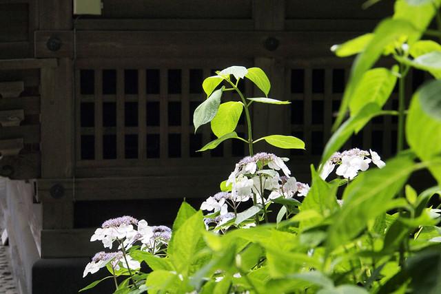 100625_102459_御霊神社
