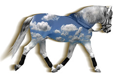 And the painted ponies go up and down (Sweet Chi) Tags: blue sky horse clouds paint painted royal pony ponies stallions stallion loh dressage lipizzan herrmanns