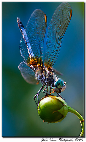Dragon Fly-1