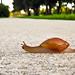 120. A Snail's Pace