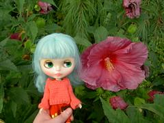 Who's the prettier flower?