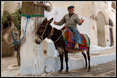 Jolly Jumper (Captain Flam's) Tags: island nikon donkey ile tokina1224 tokina santorini greece greekislands santorin grce 1224mm cyclades grece 1224 ane mediterranee d90 tokina124 pyrgos atx124afprodx griechland tokina1224mmf4atxafprodx leuropepittoresque