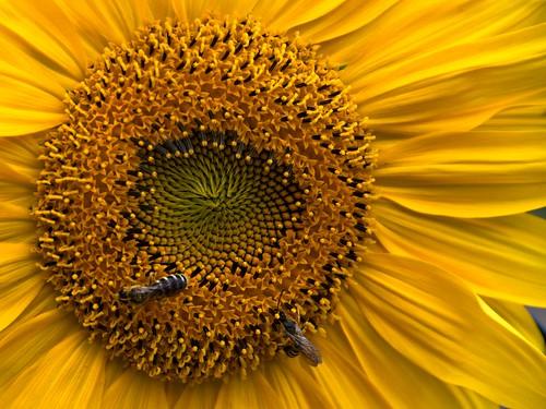 ti ho mai parlato delle api e dei fiori?