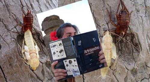 patricil leyendo artropodos en la isla de pascua mientras dos cucarachas mudan de piel