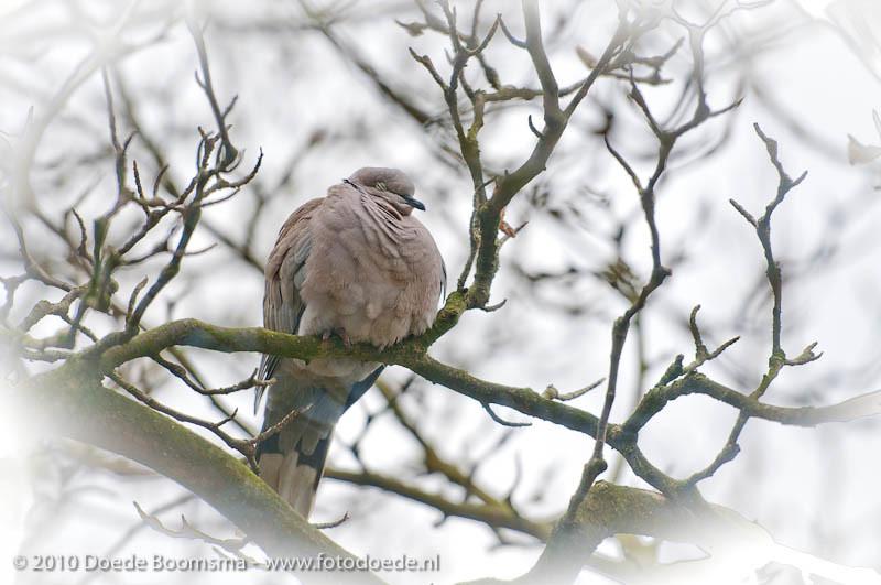 Dove doing wintersleep