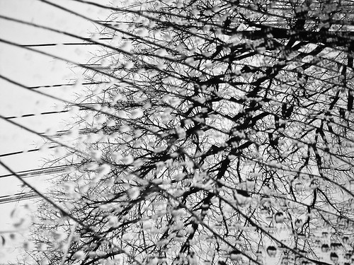Shattered (B&W version)
