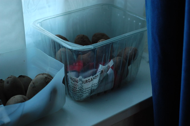 Seed potatoes sitting in a plastic container on a windowsill