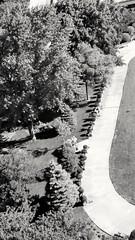 Sunday morning's shadows (williamw60640) Tags: edgewaterbeachapts chicago shadows landscape shrubbery topiary blackandwhitephotography