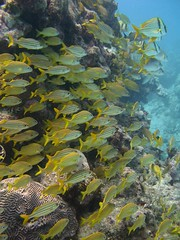 Forest of Fish (QQQQcon) Tags: ocean fish seascape nature water landscape wildlife sealife mywinners