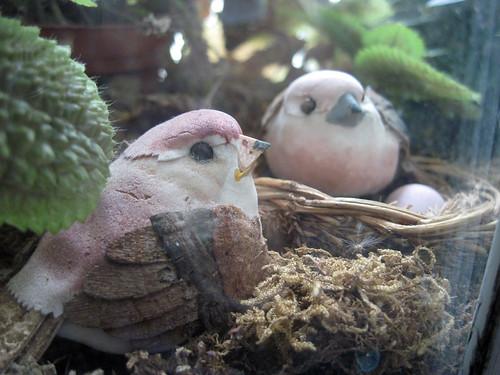 Mushroom Birds